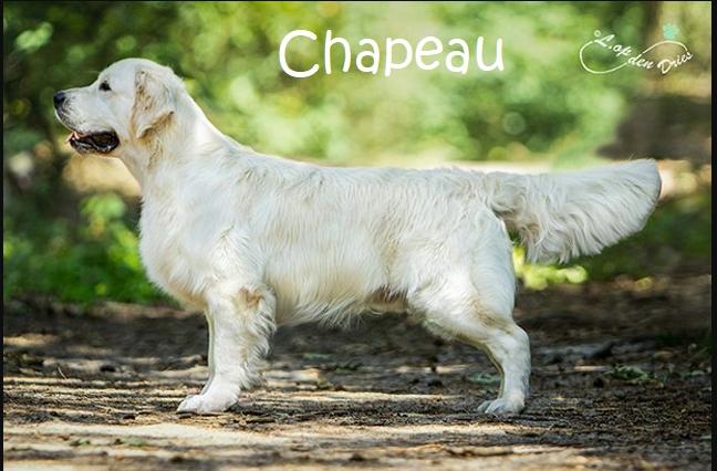 Chapeau_Fotor